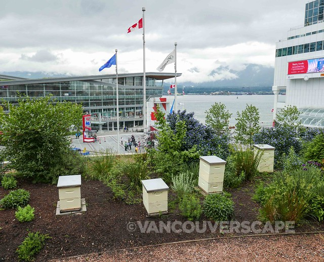 Wild for Bees Launch at Fairmont Waterfront-9
