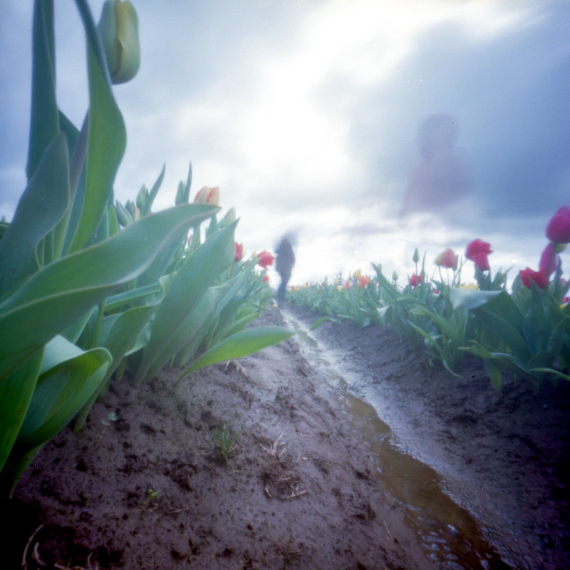 Ghosts in the tulip field