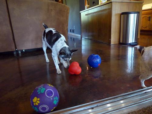 2015-06-19 - Treat Balls - 0012 [flickr]