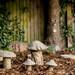 g366/029 - mushrooms