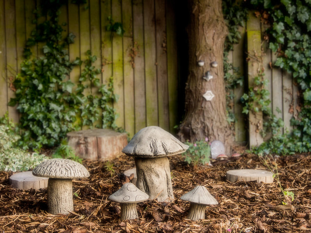 g366/029 - mushrooms