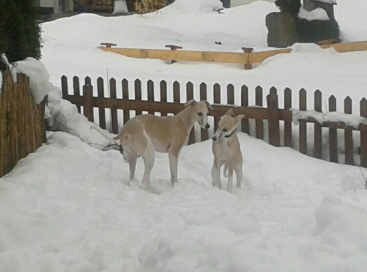 Supersisters im Schnee!