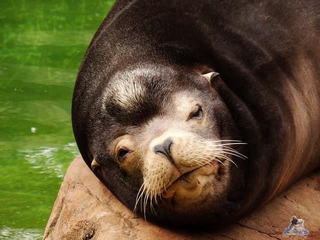 Zoo Berlin 09.06.2015  65