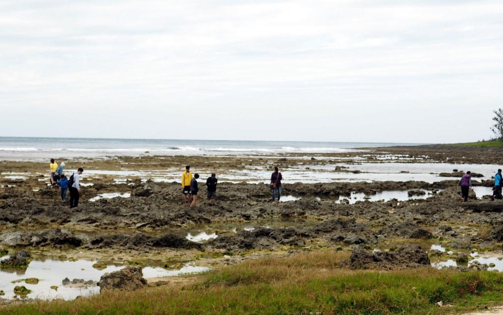 萬里潮間帶以前「會呼吸」,生態專家籲應進行遊客總量管制,墾管處已將之重新劃為生態保護區。攝影:李育琴