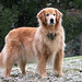 Noble Beast Dog Training Reviews