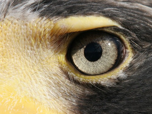 Eagle Eye | This fellow was really handsome. We were ...