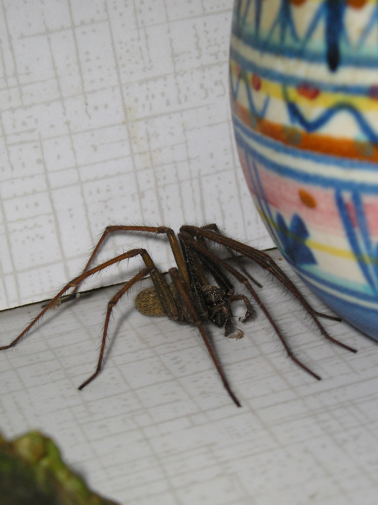 A Spider Lived In A Room That Measured