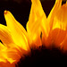 Flames of Fire