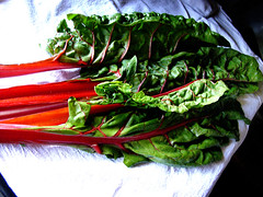 swiss chard | by chotda