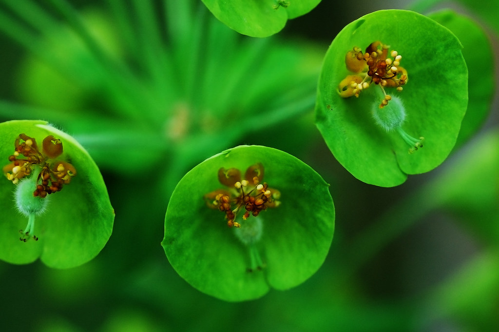 green flowers  flower, Beautiful flower