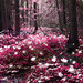 Magic forest: Pink