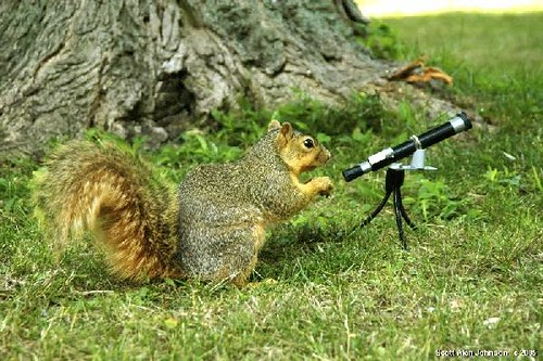 Telescopes have lenses too | by SQUIRREL400 -   photographingsquirrels.com