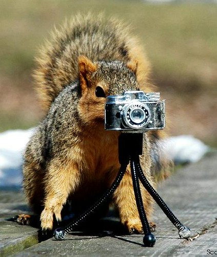 Barley Squirrel Lines Up A Shot | Here Barley Squirrel is ...