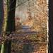 Herbstwald Oberaichen