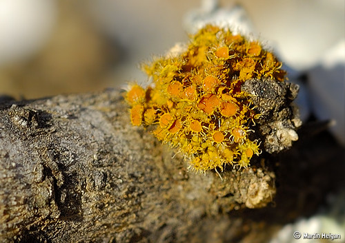 Lichen on a Tree | by Martin_Heigan