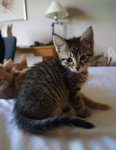 blogpaws-kittensC01573