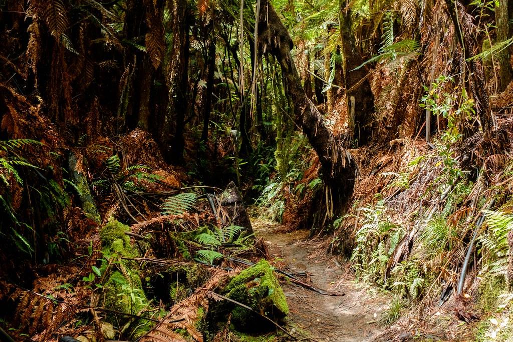 170113_Rotorua to Nat Park -9
