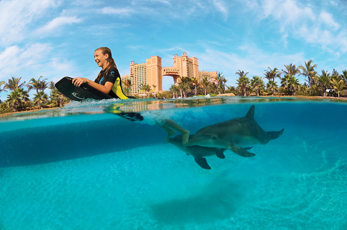 Get up close and personal with Atlantic Bottlenose Dolphins with the Deep Water Swim experience.