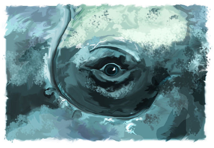 Bowhead Eye© Hull School of Art and Design