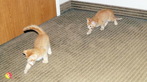 blogpaws-kittensC01622