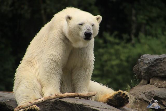 Tierpark Berlin 13.06.2015   227