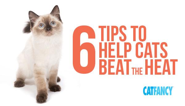 help-cats-beat-heat
