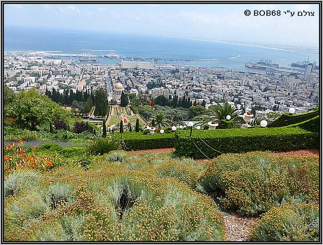 צמחייה טבעית לצד צמחייה מטופחת בגנים הבהאים ב-חיפה .