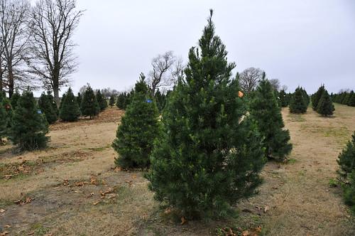 12-2016 Tree Farm