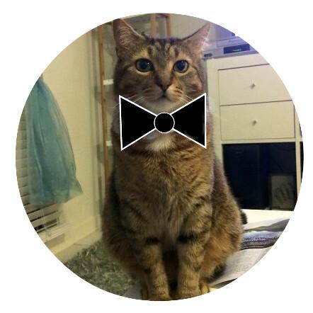 feline man of mystery