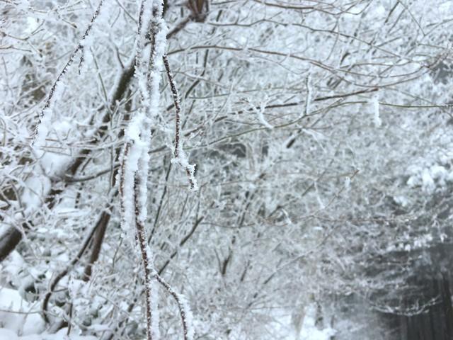 綿向山 五合目 樹氷