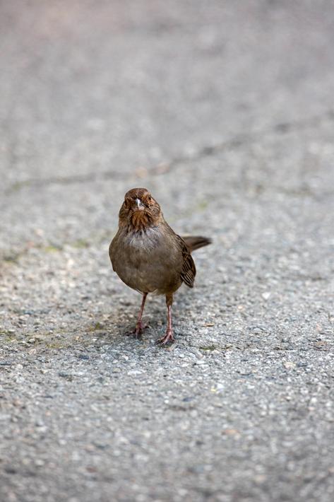 041115_birds05