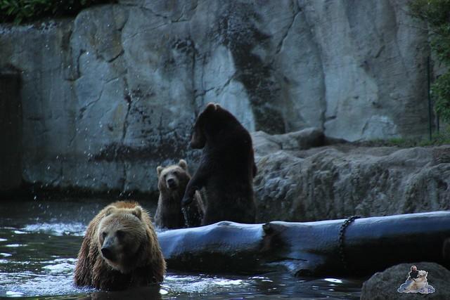 Tierpark Hagenbeck Dschungelnacht 06.05.2015   121
