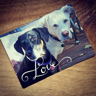 My favorite photo of Lola & Zeus...now a magnet thanks to #shutterfly - Love it! #missthem #cancerbites #mybabies #dogsofinstagram #cancersucks #ilovemydogs #lifeistooshort #caninecancerawareness