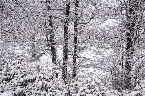 Morning Snow | by Stephen Downes