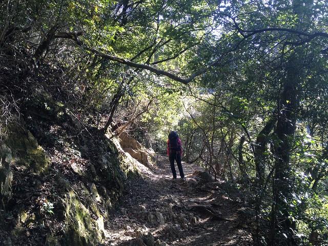 金華山 めい想の小径 登山道 しな