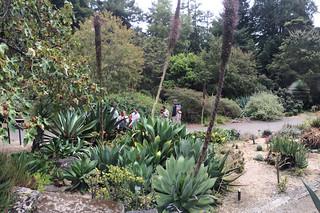 SF Botanical Garden - Agave