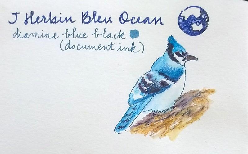2017-01-28 Bluejay doodle