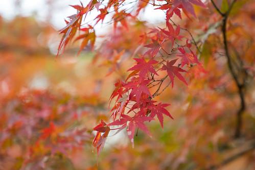 autumn_leaves_2017_03