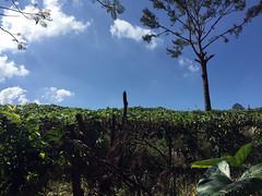 50 - Felder nahe Jarabacoa 02