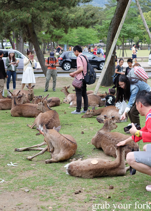 Wild deer and tourists at Nara Park, Japan