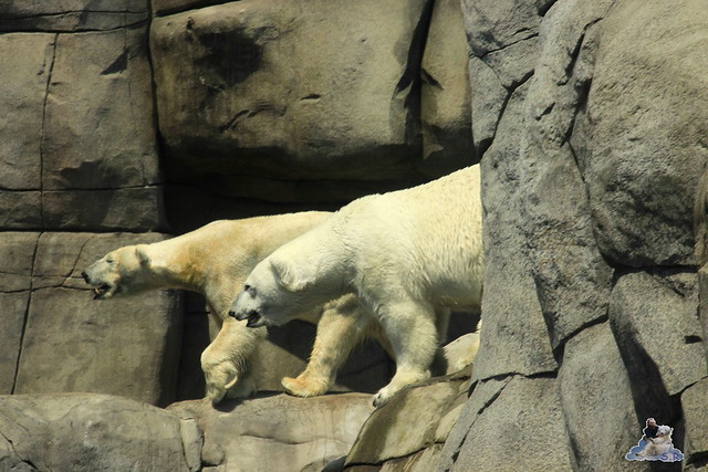 Tierpark Hagenbeck 04.07.2015  10