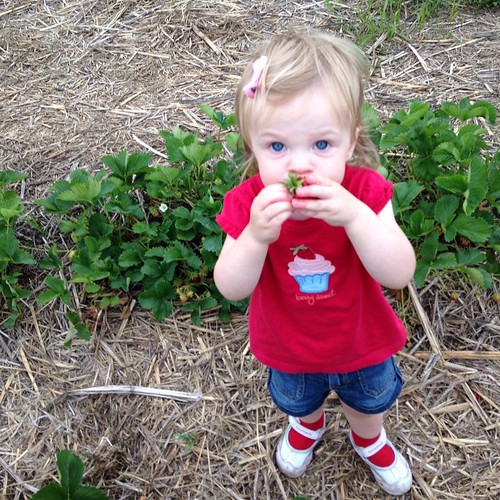 We went strawberry picking tonight!! 81/100 #the100dayproject #my100daysofeverydaymoments 🍓🍓