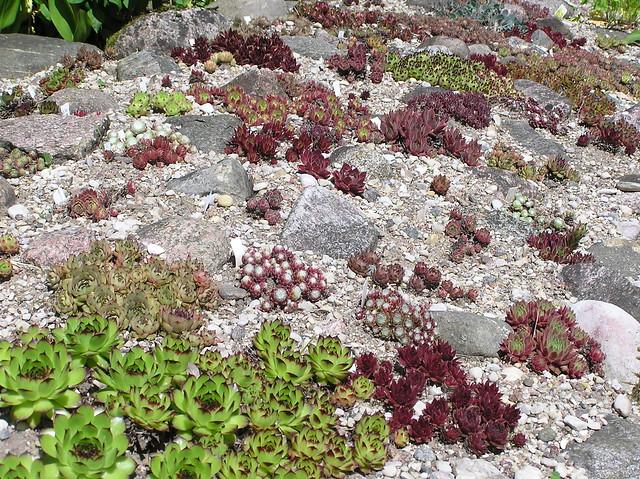 Perennials Bed border