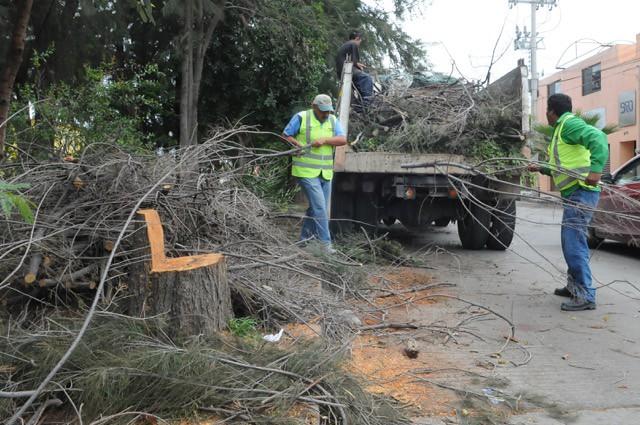 Ayuntamiento no aplica multas económicas por daños en las plantas