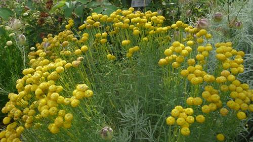 Rouen Jardin Des Plantes Fleurs Jean Louis Allix Flickr