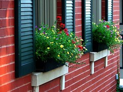 Flower Boxes | by Creativity+ Timothy K Hamilton