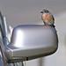 The Carbird