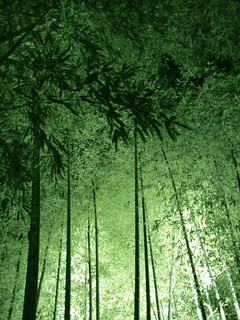 bamboos lit up | by Issey*