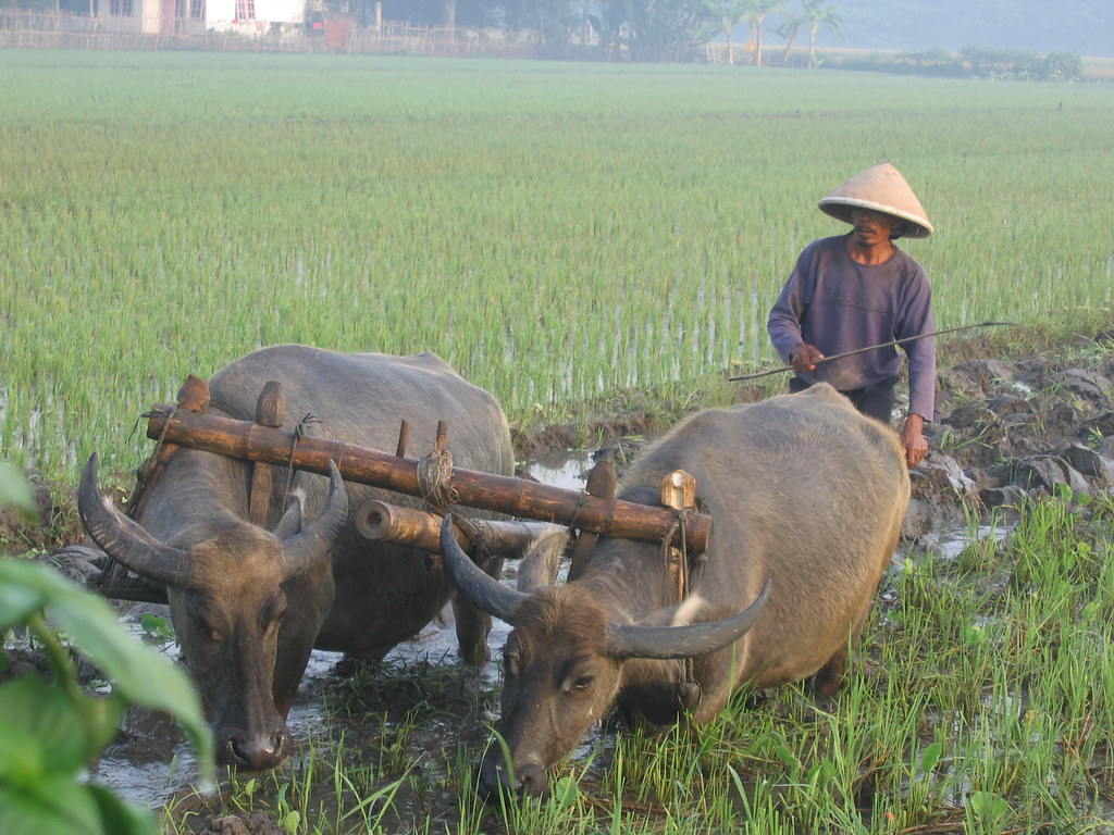Bajak Sawah Pitie Flickr By