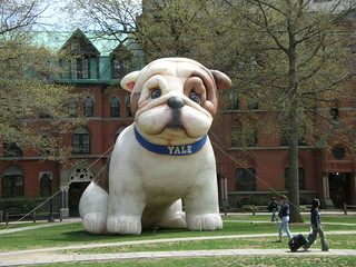 Giant Inflatable Bulldog - Redux | by Adam Solomon